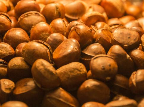 板栗价格多少钱一斤?种植前景及利润怎么样?